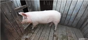 Vand Porc  - imagine 3