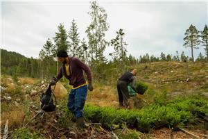 Bjarne Company lucrator in industra forestia - imagine 3