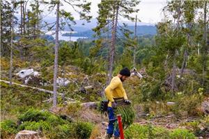 Bjarne Company lucrator in industra forestia - imagine 2