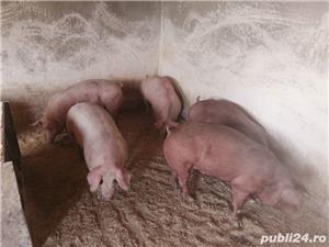 Porci de carne de vanzare - imagine 3