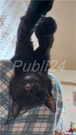 Donez pisica - imagine 3