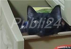 Donez pisica - imagine 5