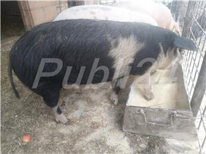 Vând porci de carne - imagine 1