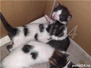 pisici donații  - imagine 4