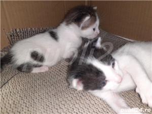 pisici donații  - imagine 3