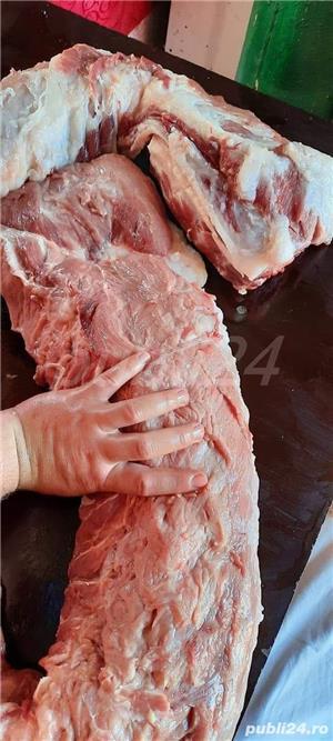Porci rasa de carne PIC - imagine 6