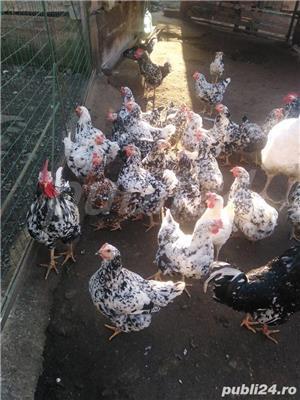 Vând ouă - imagine 8