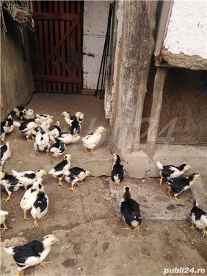 Vând ouă - imagine 5