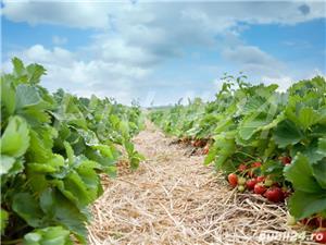 Sezonieri ferma agricola Germania - imagine 2