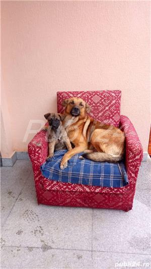 Doi cățeluși își caută casă! - imagine 7