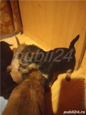 Foxtterier cu maidanez - imagine 1
