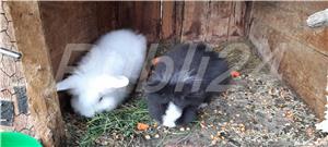 Vand pui de iepuri! - imagine 1
