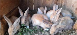 Vand iepuri! - imagine 1