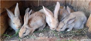 Vand iepuri! - imagine 3