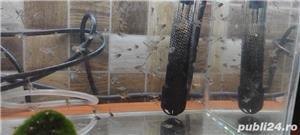 vand pesti - imagine 2